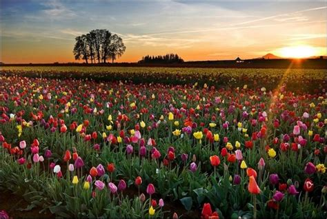 Flowers Of Netherlands - the flower farm in holland what s up for today