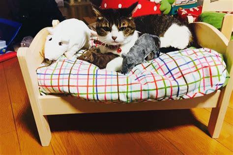 Lettini Per Gatti Ikea by Ikea Duktig Lettino Cuccia Per Gatti 11 Keblog