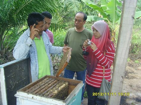 Madu Lanceng Original Lebah Dan Kelulut November 2012
