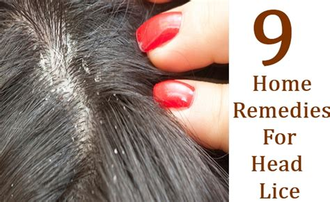 9 home remedies for lice search herbal home remedy