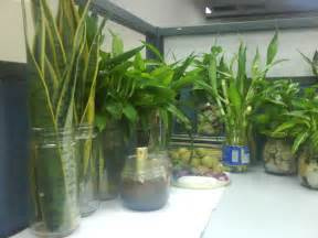 Indoor Plant Decoration by Gallery For Gt Indoor Potted Plant Ideas