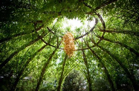 Willow Gardens by Living Willow Garden Decor Structure 1001 Gardens