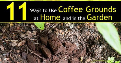 Coffee Grounds In The Garden by 11 Ways To Use Coffee Grounds In The Garden