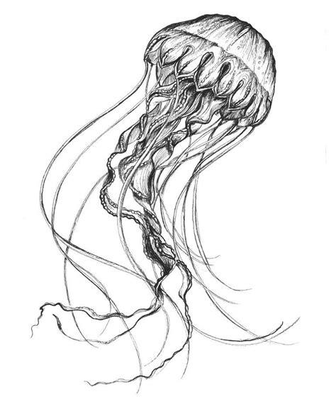 Drawing Jellyfish by Jellyfish Drawing Tattoos Jellyfish