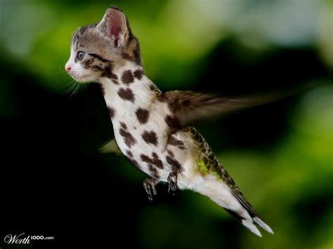 cat hummingbird dalmatian hybrid укатайка pinterest