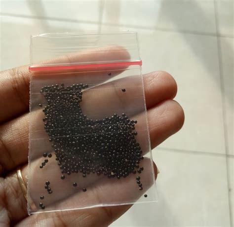 Benih Bibit Bayam Cabut Kartika 500 Gram tips cara mudah menanam bayam dalam pot atau polybag bibit