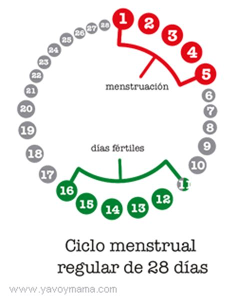 ciclos menstruales cortos los ciclos menstruales irregulares hablemos de fertilidad