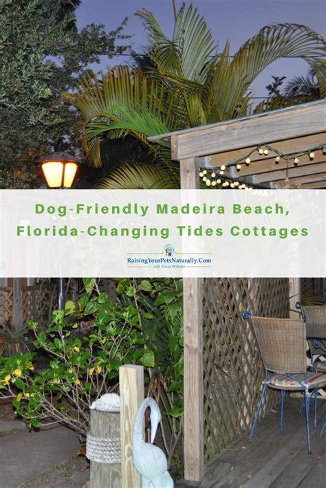 pet friendly dog friendly hotels dog friendly madeira