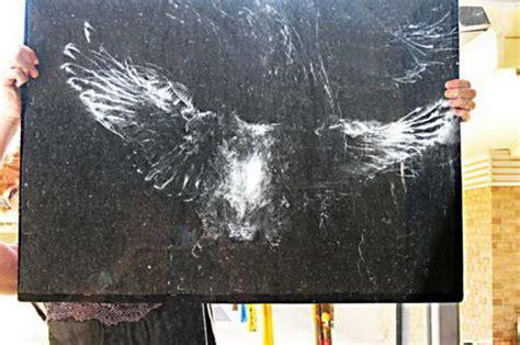 птичьи автографы отпечатки сов и голубей на стеклах окон