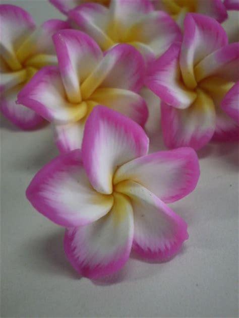 fiori hawaiani fiori hawaiani gpsreviewspot