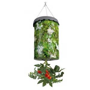 hanging tomato grow bag by fallen fruits