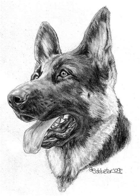 how to draw a german shepherd german shepherd by genevieve schlueter