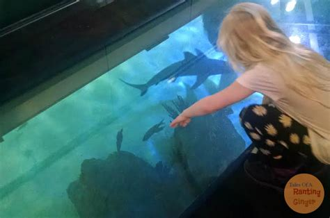 Aquarium Floor by Ripley S Aquarium Toronto Great For The Family