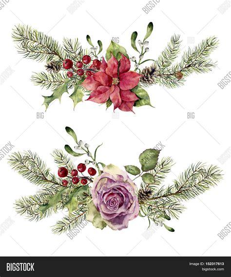 watercolor winter floral elements image photo bigstock