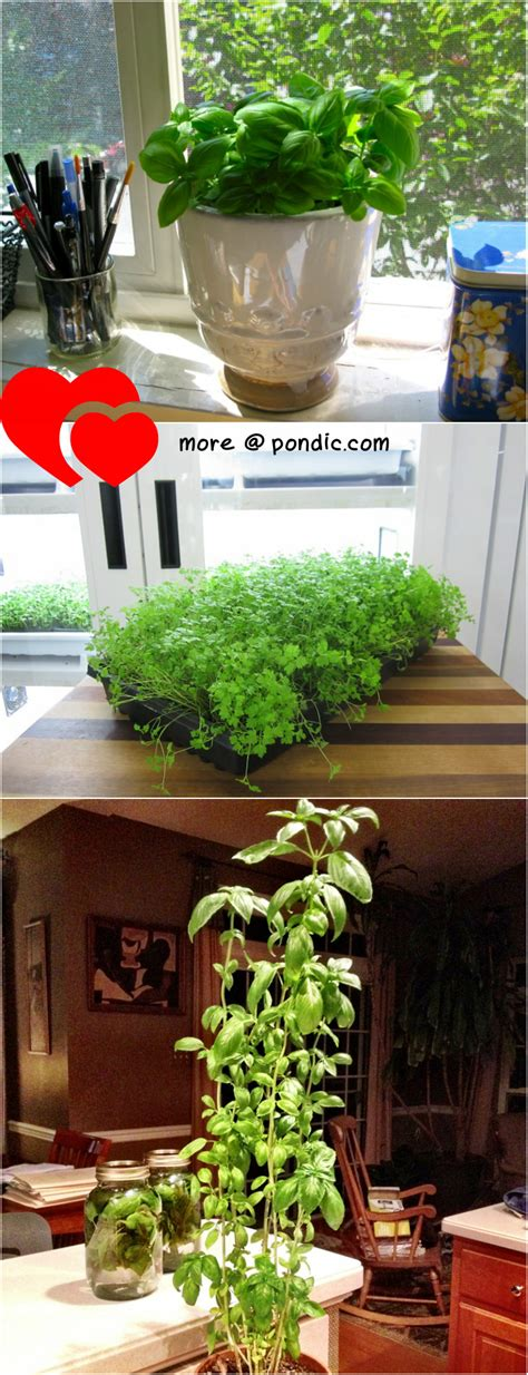 indoor herb garden ideas indoor herb garden ideas 10 herbs you can grow indoor