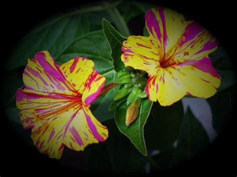 fiori belli di notte