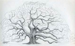 Oak Tree Drawing Pics Photos Oak Tree Drawing Learning To Draw Landscape