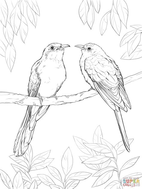 94 Coloring Pages Of Cuckoo Bird