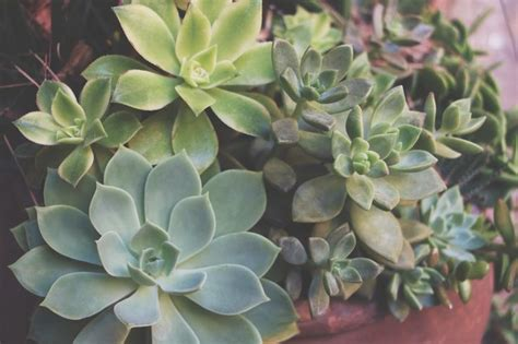 Propagating Succulents Needles Leaves - 1000 images about succulents via needles leaves on