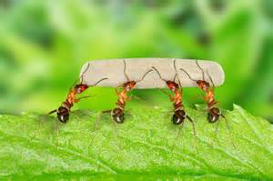 Bed Bug Company Diy Ant Removal Fischer S Pest Control