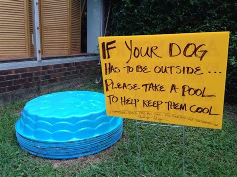 dog poo in house woman gives kiddie pools to dog owners wins the internet