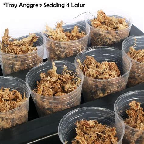 Pot Plastik Untuk Anggrek tray semai bibit anggrek untuk pot anggrek 1 5