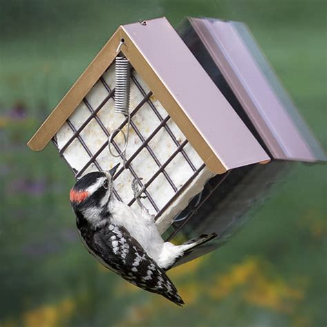 duncraft com window copper top suet feeder