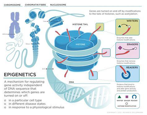 epigenetica e alimentazione new epilepsy genes involved in epigenetics a survey