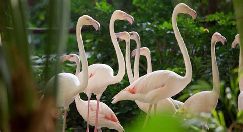 Nucover Tropical Flamingo if you miss summer time there re year indoor