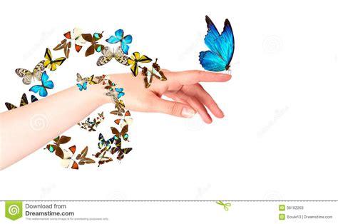 imagenes con movimiento de mariposas mariposa en la mano de la mujer en el movimiento fotos de