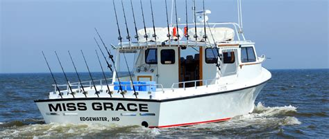 charter boat fishing maryland chesapeake bay charter fishing miss grace charters