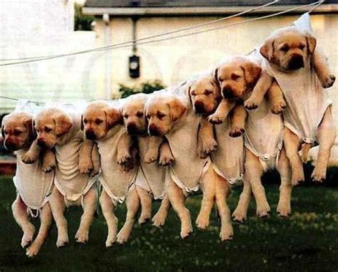 new puppy gift baskets puppy gift baskets puppy
