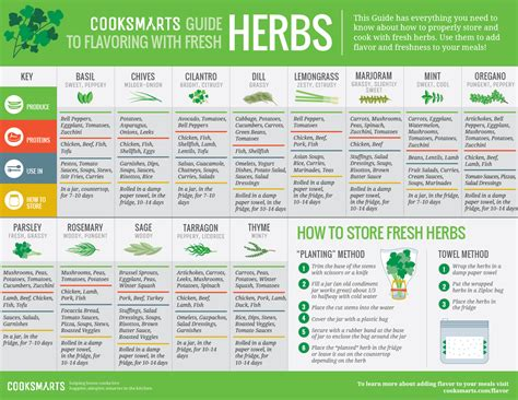 herbal academy using flavorful culinary herbs herbal our guide to using herbs cook smarts