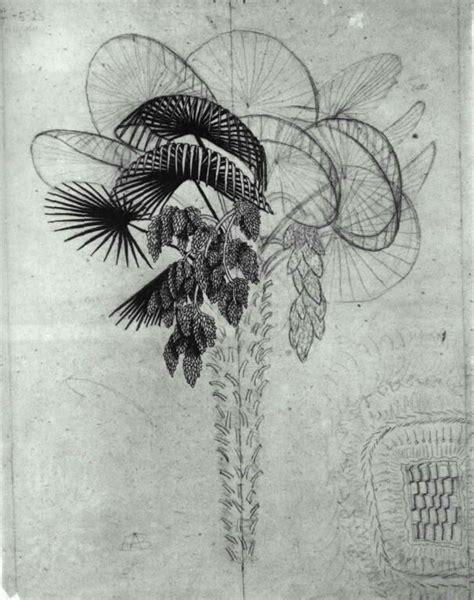 M C Escher Sketches by Palm Tree Sketch M C Escher Wikiart Org