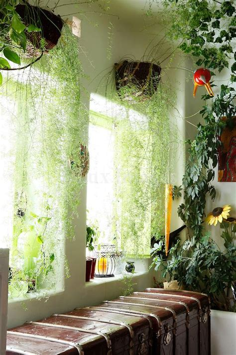 hanging plant curtains gardening indoor