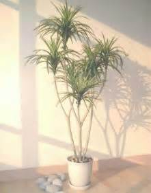 Foliage House Plants Identification - 4 5 ft yucca palm tree imitation house plants
