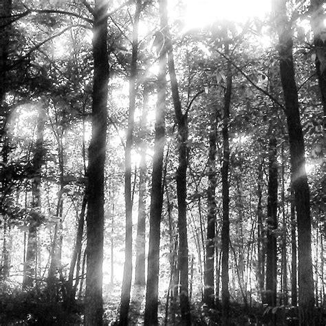 white black forest black and white forest by meekoweekoofdoom on deviantart