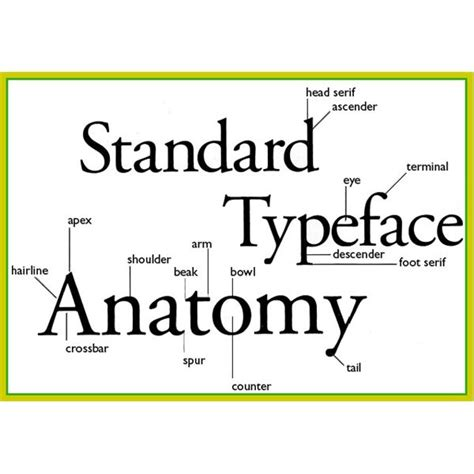 typography letter parts anatomy of typography basic elements of typography