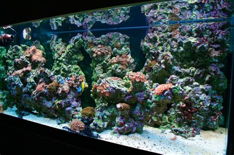 on the rocks how to build a saltwater aquarium reefscape how to make your own live rock practical fishkeeping