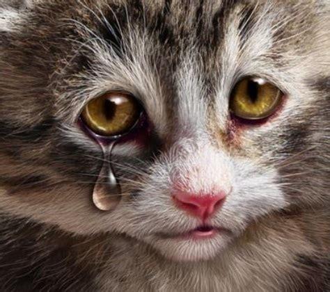 Wallpaper Chat Lucu | kumpulan gambar kucing lucu imut kumpulan gambar