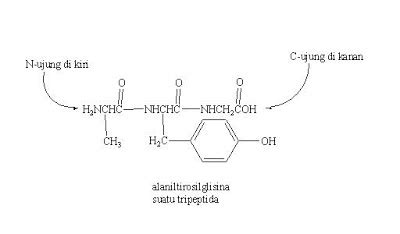 Buku Kimia Organik Fessenden Dan Fessenden peptida sains