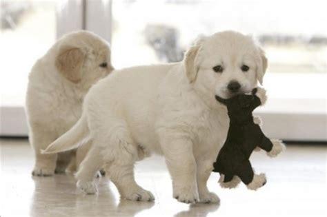 imagenes de animales en movimiento perros con movimiento imagui