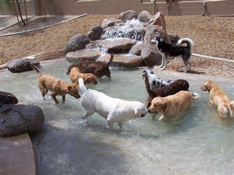 Second Home Pet Resort by Photo Gallery Second Home Pet Resort Az