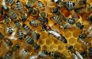 dvd 171 la disparition des abeilles la fin d un myst 232 re 187 de