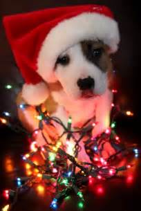 cute christmas picture animal i should do this with my