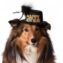 new year for dogs happy new year hat black baxterboo