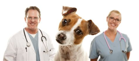 free neutering for dogs free pet magazine 187 spay and neuter clinic az