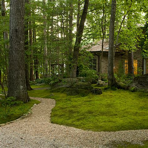 Moss Backyard by Plant A Moss Lawn Southern Living