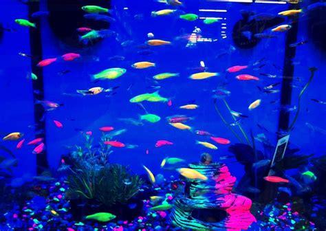 Fish Tank Light by Black Light Fish Black Lights