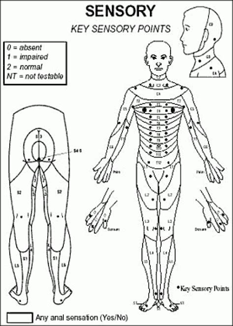 Asia Sensory Dermatome Physical Therapy Spinal Cord